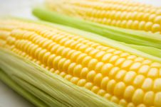 Free The Corn On White Stock Photography - 15473032