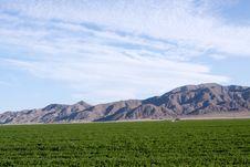 Free Farmland Royalty Free Stock Photo - 15474875