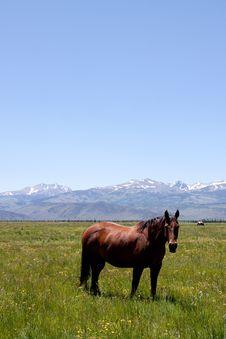 Free Horses Grazing Royalty Free Stock Photos - 15475328