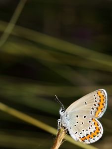 Free Butterfly 1 Royalty Free Stock Image - 15475796