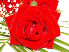 Free Bouquet Of Red Roses Stock Photos - 15476883