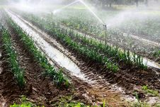 Free Irrigation Stock Images - 15477714