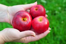 Free Hand Offering An Apples Royalty Free Stock Image - 15478496