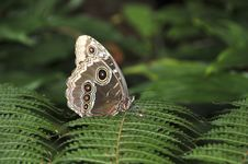 Free Butterfly In The Forest. Royalty Free Stock Photos - 15479888