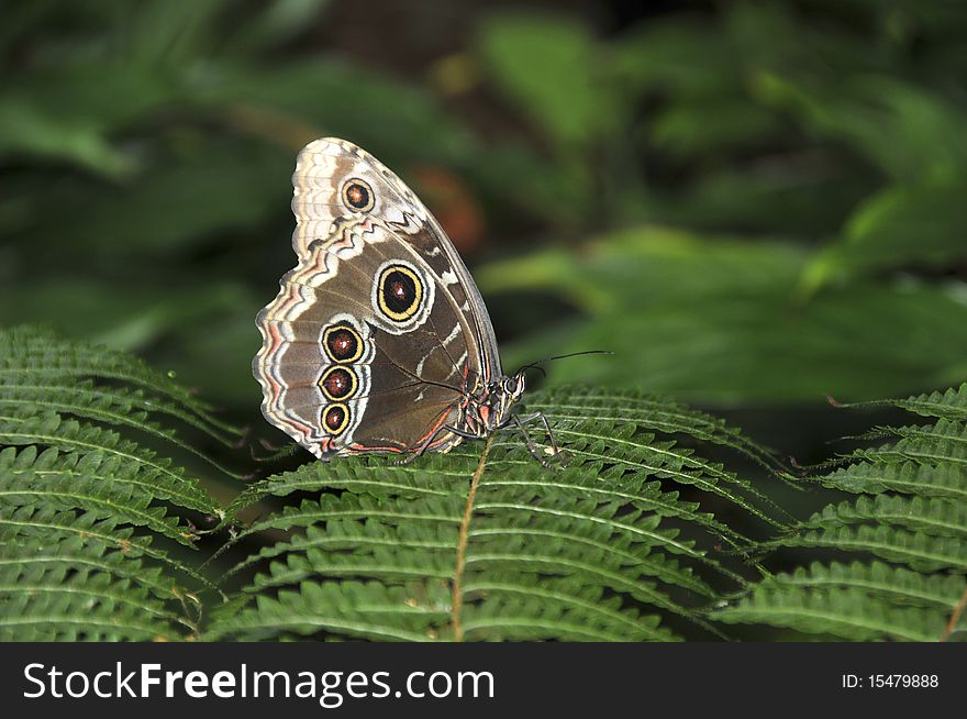 Butterfly in the forest.