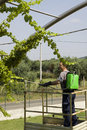 Free Watering Grapes Stock Photography - 15482342