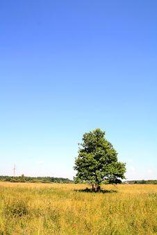 Free Oak On Field Stock Photos - 15485933