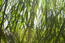 Free Grass Royalty Free Stock Photography - 15486067