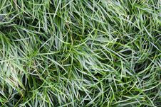 Free Grass Stock Images - 15486074