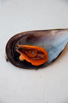 Free Mussels Boiled Stock Image - 15486551