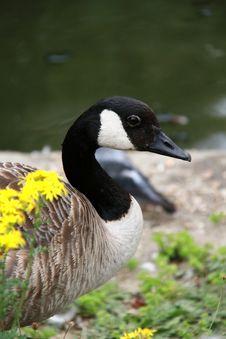 Free Bird 1 Stock Photography - 15486552