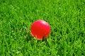 Free Green Grass Pink Ball Stock Image - 15497061