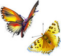 Free Two Butterflies Royalty Free Stock Photography - 15499607
