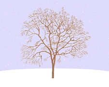 Free Tree In Snow Royalty Free Stock Photography - 15491187