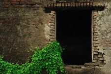 Free Ancient Window And Green Plants Royalty Free Stock Image - 15491396