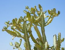 Free Top Of A Cactus Against A Blue Sky Royalty Free Stock Images - 15492509