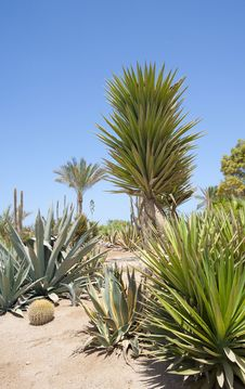 Free Desert Garden With Various Plants Royalty Free Stock Photography - 15492577