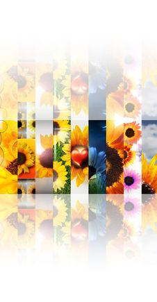 Sunflower Collage Royalty Free Stock Image