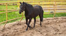 Free Horse On The Site For Training Royalty Free Stock Images - 15493349