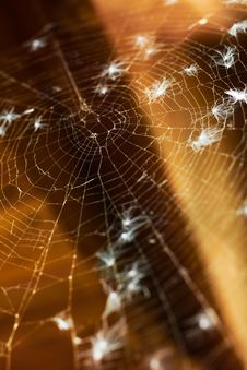 Free Old Spider Web. Shallow DOF. Stock Photo - 15494060