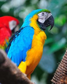 Free Macaw On A Tree Stock Images - 15494184