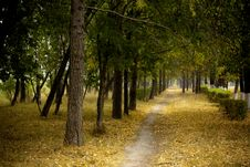 Free Pathway In Autumn Park Royalty Free Stock Photography - 15494727
