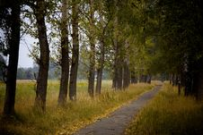 Free Pathway In Autumn Park Royalty Free Stock Photography - 15494777