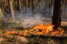 Free Fire In Summer Forest In Russia Stock Images - 15495054