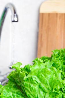 Free Fresh Lettuce Stock Images - 15496094