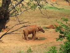 Free Elephant On Savannach Stock Image - 15496671