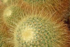 Free Cactus Royalty Free Stock Image - 15496976