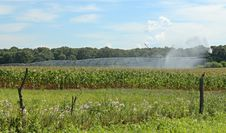 Free Irrigating A Corn Field Stock Image - 15498761