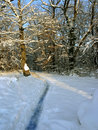 Free Path In Snow Royalty Free Stock Image - 1552216
