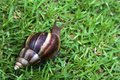 Free Snail Royalty Free Stock Photos - 1555698