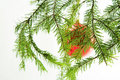 Free Red Ball On A Fir Branch Royalty Free Stock Photos - 1558108