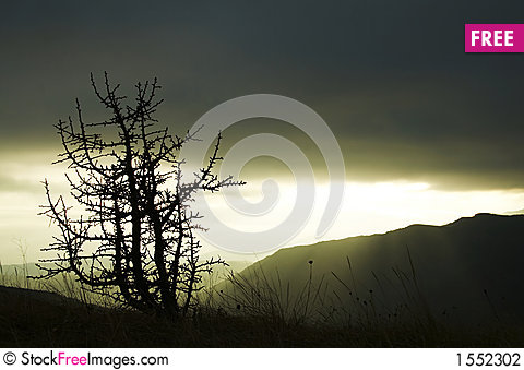 Tree silhouette of evening Stock Photo