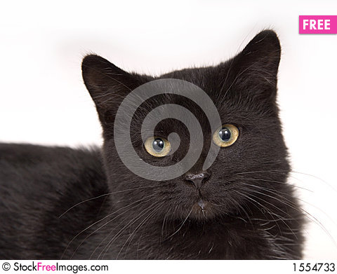 Face of a black cat Stock Photo