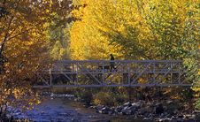 Fall Colours With Bridge
