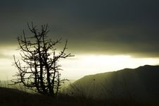 Tree Silhouette Of Evening Stock Photography