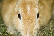Free Rabbit Eyes Stock Photography - 1552792