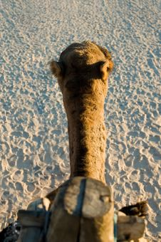Free Camel Riding - First Person Perspective Stock Photo - 1554950