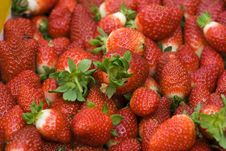 Free Strawberries Stock Photography - 1555672