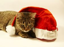 Free Cat And Christmas Hat Royalty Free Stock Image - 1556566