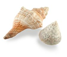 Free Seashell Stock Images - 1556694