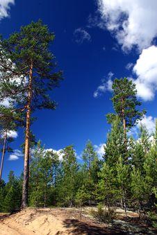 Lake Ladoga. A Beach. Royalty Free Stock Photography