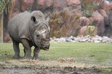 Free Rhinoceros Stock Images - 1557894