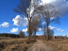 Free Leafless Trees Royalty Free Stock Photos - 1559078
