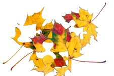 Free Leaf Puzzle Royalty Free Stock Photo - 1559965