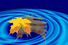 Free Leaf And Blue Waves Royalty Free Stock Photos - 1559968