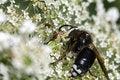 Free Ambush Bug Stock Photography - 15506032